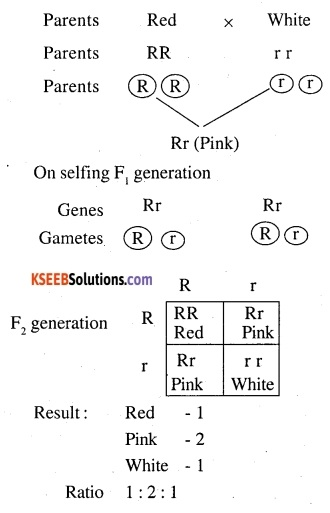 2nd PUC Biology Question Bank Chapter 5 Principles of Inheritance and Variation 14