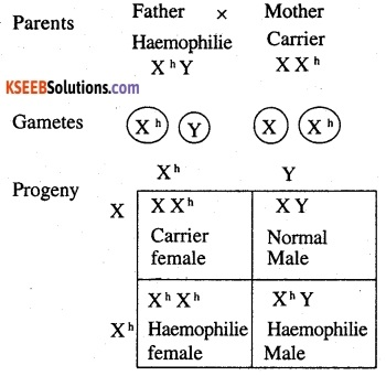 2nd PUC Biology Question Bank Chapter 5 Principles of Inheritance and Variation 19