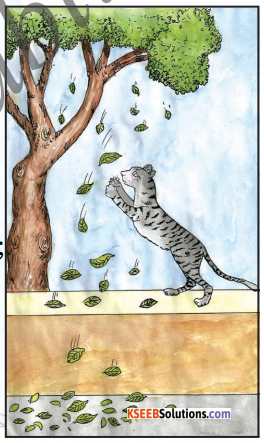The Kitten at Play Summary In English 1