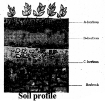 KSEEB Solutions for Class 7 Science Chapter 9 Soil 27